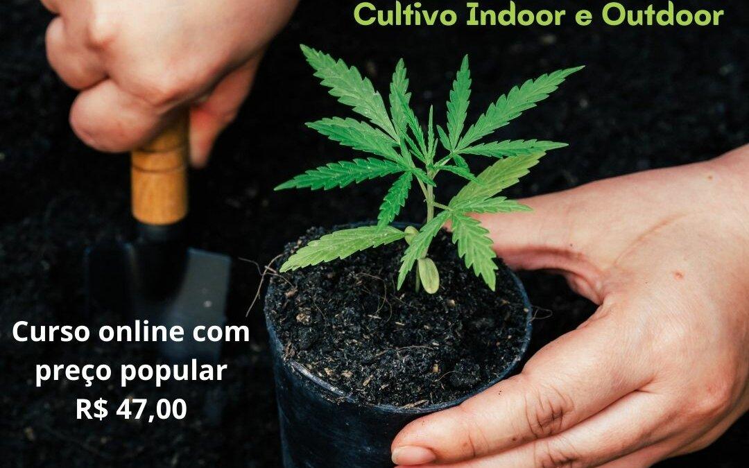 Da semente ao Paciente: curso de cultivo de cannabis.